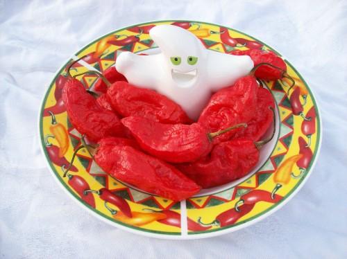 Super Hot Indian 10 Capsicum chinensis BHUT JOLOKIA CHILLI SEEDS