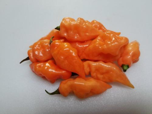 Habanada Pepper | Super Hot Chiles