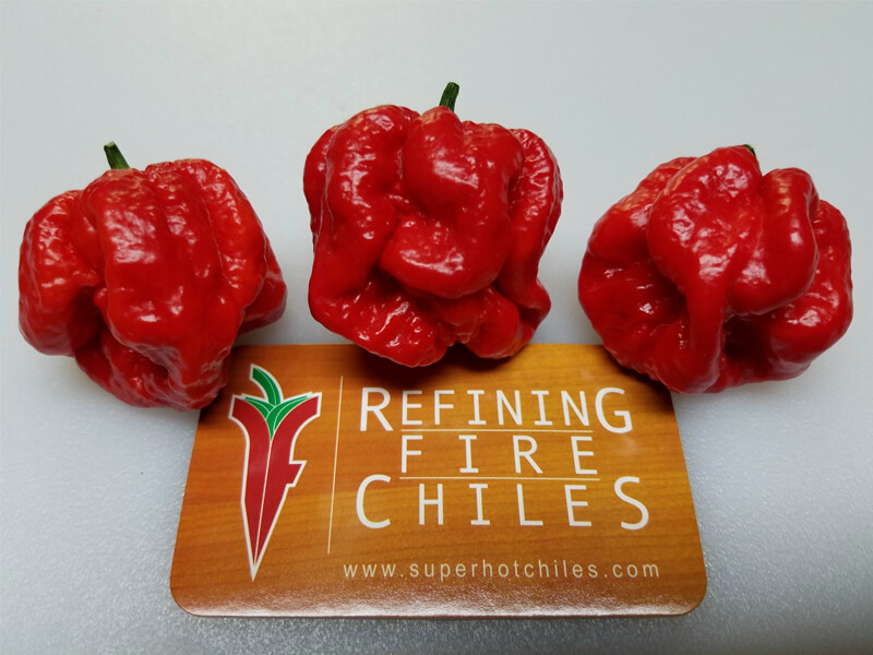 MOA Scotch Bonnet Red
