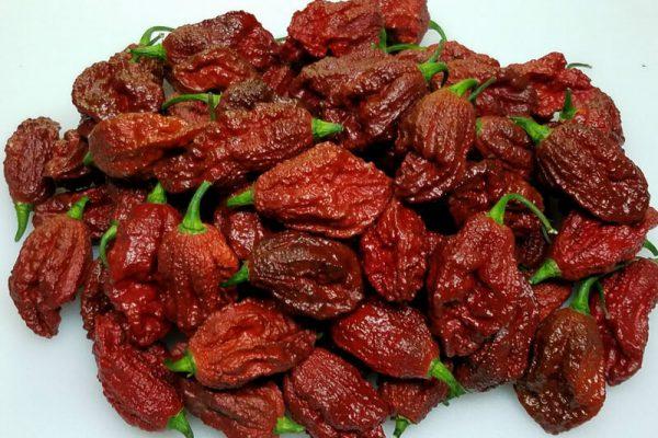 Chocolate Bhutlah CS 1