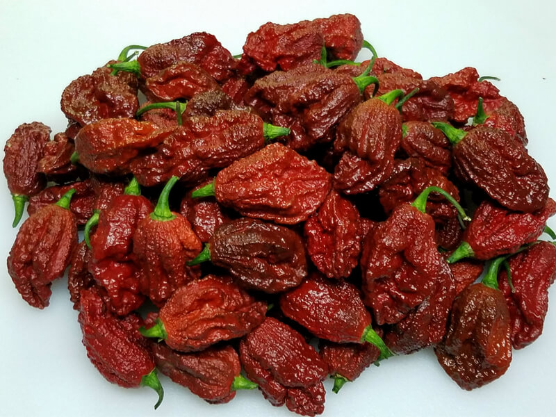 Chocolate Bhutlah CS 2