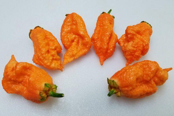 Naga Bubblegum Cross Orange