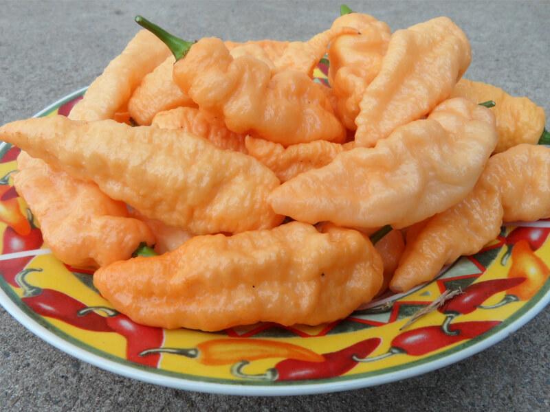 Peach Bhut Jolokia 9