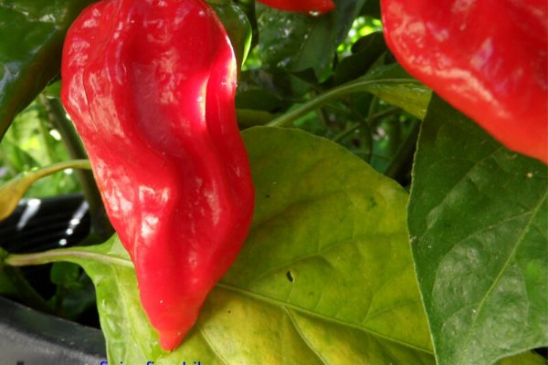 Fatalii Red 1