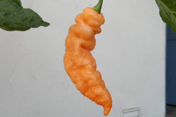Peach Bhut Jolokia 1