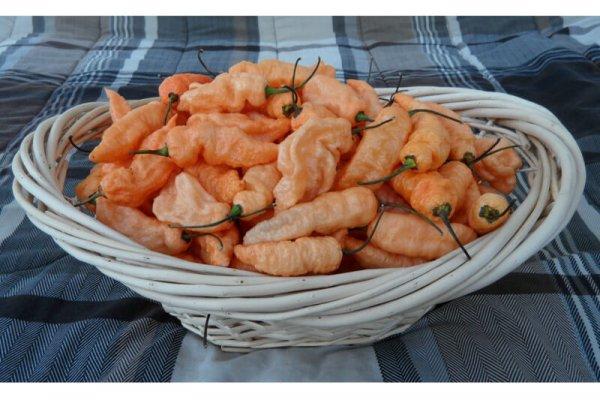 Peach Bhut Jolokia 8