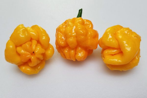Scotch Bonnet TFM