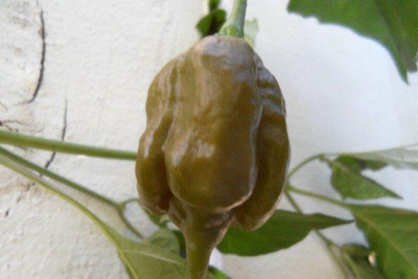 Trinidad Mustard Scorpion 5