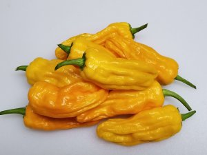 ChilesOrangePepperoncini16 2018